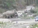 路駐してる車を取り締まり移動するゾウたち。