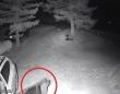 熊「夜中に失礼しますよ!」車のドアを開けて勝手に入り込んだクマー