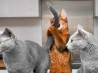 今日も今日とて「猫あるある」な所業を見せつけてくれるのか?ハテナマーク大爆発な世間の猫たち総集編