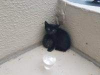 母とはぐれ身を寄せ合って固まっていた子猫3匹を保護。今ではすっかり甘えん坊に(アメリカ)