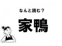 """【難読】""""やかも""""? 「家鴨」の正しい読み方"""