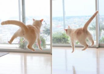 無重力猫(画像は忍者猫チャコたん&すず香(@wakaponsan)さんから)