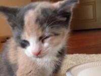 思わずうっとろりん。ミルクを飲む子猫が見せたミニチマ香箱座り