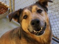 保護施設で2381日過ごした犬。ついに家族に巡り合える(アメリカ)