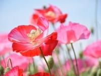 【花言葉】「感謝」にまつわる花