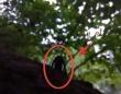 ロシアにも小さいおじさんが?森の奥深くで発見された中年男性の妖精のような謎生物