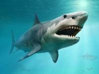 巨大ザメ「メガロドン」の絶滅は考えられていたより早かった可能性。ホホジロザメとの争いに負けた?(米研究)