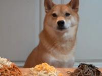 麺類大好きな柴犬ハルさん、オーガニックの素敵な麺類を次々と召し上がる