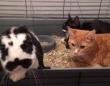 猫のアニキ分はなんとウサギ!3匹の猫たちを従えて過ごす毎日(イギリス)