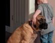 お姉ちゃんと喧嘩。一人で反省させられている少年にやさしく寄り添う犬