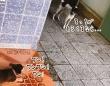 小犬に吠えられた犬、怖くなって立ち去ったかと思いきや最強の助っ人を連れてきた