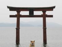 柴犬まるが紹介する滋賀の旅(後編)~まる、『近江の厳島』に感動~