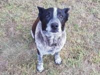 迷子になった3歳の少女に寄り添い雨の中、一晩中守り続けた17歳の老犬(オーストラリア)