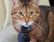 首輪につけるだけ!ペットの目線で撮影出来る「ペットミタマンマカメラ」好評発売中!