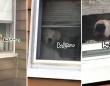 もはやその視線からは逃れられない... 追尾モードを搭載した自宅警備犬の監視システムがすごかった。