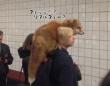 一方ロシアでは、キツネのリアルファー(まるごと生体)を身に着けた女性が地下鉄に乗ろうとしていた