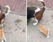 野良の子猫、犬の散歩をしていた人にロックオン。粘り強く後をついていき永遠の家を手に入れる(アメリカ)