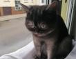 個性的な顔立ちが原因で引き取り手が現れず1年も避難所にいた元野良猫、ようやく永遠の家族に巡り合える(ドイツ)