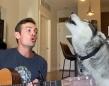 音楽大好き、歌うの大好き!飼い主のギターで熱唱するハスキー犬(アメリカ)主人と一緒に歌うハスキー(アメリカ)