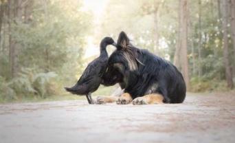 南仏の森に流れるやさしい時間。仲良しな犬とアヒルの写真集