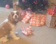 うわあ、これ欲しかったの、ありがとう!クリスマスプレゼントに大喜びのペットたち