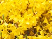 【花言葉】「希望」にまつわる花