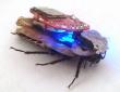 ゴキブリに襲われる日が来るかもしれない
