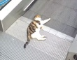 この動いてる感じがたまらんにゃ。オートスロープを愛でる猫