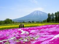 芝ざくらと羊蹄山(ニセコ) YsPhoto / PIXTA(ピクスタ)