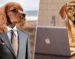 年に一度、職場に飼い犬を連れていくことができるチャリティイベントが今年もイギリスで開催される。