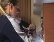 Hope For Paws~煙突の中から救出された子猫、高速道路で保護された子猫といっしょに新しい家族のもとへ