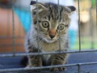 動物虐待が凶悪犯罪の予兆?(shutterstock.com)