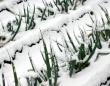 厳しい冬を乗り越えた、春の味覚(画像はイメージ)