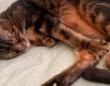 獣医のもとにシニア猫が運ばれてきた。安楽死を選びたくなかった獣医さん、そのまま飼い主へ立候補