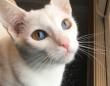 1つの瞳に2つの色。ダブルオッドアイの猫、オリーブの魅力にズームイン!(イギリス)