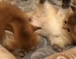 お疲れのあなたに。じゃれまわる子猫たちをただ愛でる動画でほっこりしようよ
