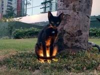 異世界に通じているのか?猫の魔性を垣間見た10の瞬間