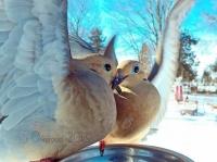 庭に訪れた美しい野鳥たちを撮影した写真家のインスタグラム(アメリカ)