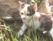 おうちのなかで猫たちと過ごそう!愉快なにゃんこズがあれこれやらかす楽しい動画総集編