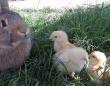 うさぎとヒヨコが仲良く木陰でくつろぎ、猫たちも登場するファンタジーな光景