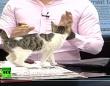 とあるにゃんこのビデオボム。ニュース番組の生放映中に乱入してきた猫