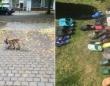 キツネの靴フェチ。野生のキツネが地域住民の靴やサンダル100足以上を盗む(ドイツ)