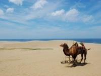 鳥取砂丘(「Wikipedia」より)
