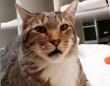 おまえら全員逃がしてやる。特殊スキルを持つ保護施設の猫、仲間を脱走させた罪で独房に監禁される(アメリカ)