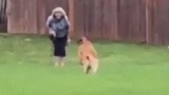 お散歩中に再会。大好きなおばあちゃんを発見した犬の見せた猛ダッシュ、真っすぐな愛