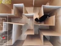 猫の脱出大作戦!ダンボールで作った巨大迷路をクリアすることができるのか?