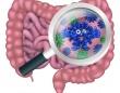 人間の腸の中に14万種ものウイルスを発見。そのうち半分は完全な新種(英研究)