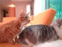 「しーっ、ちょっと静かにしてよ!」サモエドと猫の3兄弟が静まり返るのはどんな時?