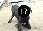 """【閲覧注意】インドで一つ目の""""サイクロプス・ヤギ""""が生まれる"""