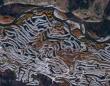 カナダの山中に突如現れた謎のワーム状の構造体の正体が12年の時を経てようやく解明される